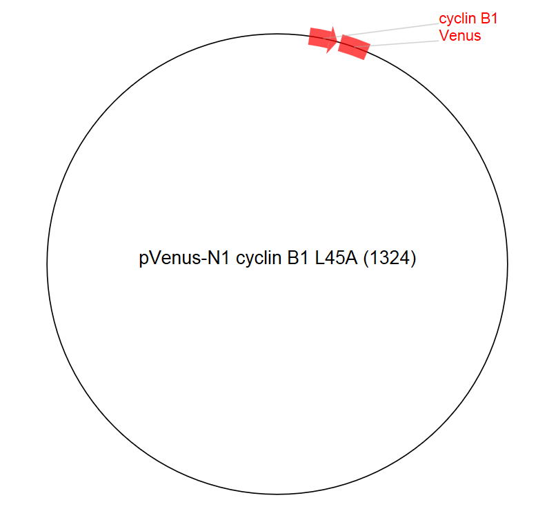 Image for pVenus-N1 cyclin B1 L45A (1324) Vector