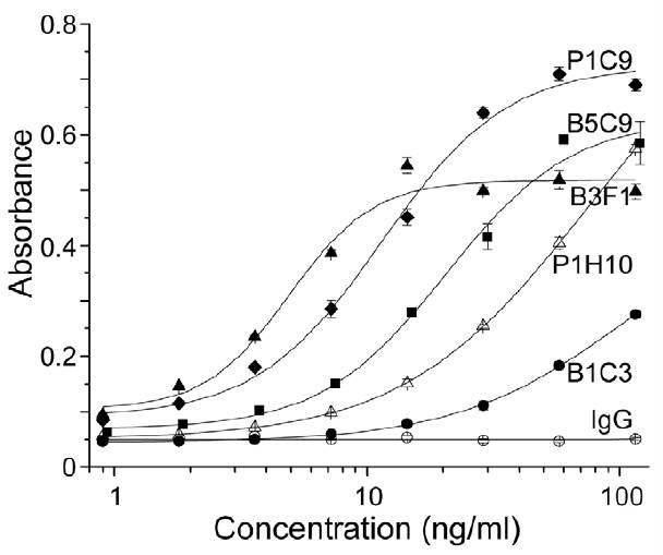Titration of mAb activity in m5T4 specific ELISA.   Anti-m5T4 monoclonal antibodies were titrated by doubling dilution between 0 and 0.1 mg/ml by sandwich ELISA.in 96-well ELISA plates pre-coated at 4C overnight with 1 mg/ml m5T4-pIgFc in borate buffer (100 mM boric acid 150 mM NaCl; pH 8.5). Antibody binding was detected using goat anti-mouse IgG conjugated to HRP. The plates were developed using tetramethyl benzidine, the colour reaction was stopped with 1 M sulphuric acid and the absorbance read at wavelength 450–650 nM. (Southgate et al. 2010. PLoS One. 5(4):e9982. PMID: 20376365)