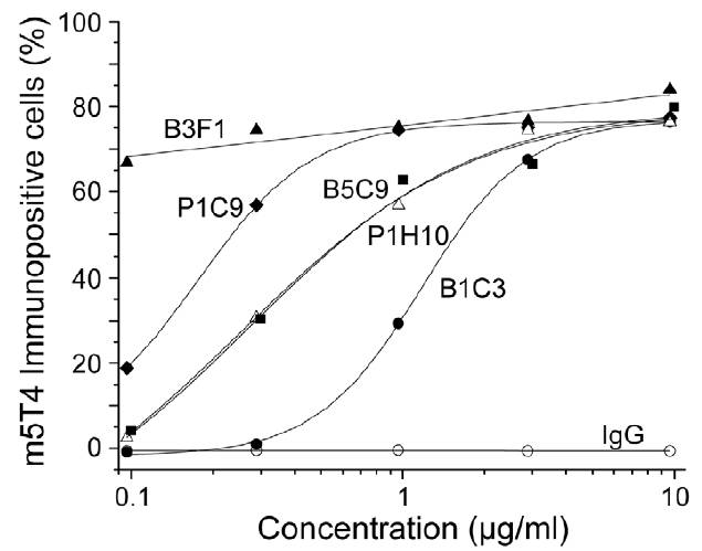 Titration of mAb cell surface labeling of B16m5T4 tumor cells by flow cytometry. Cells were suspended in FACS buffer (PBS, 0.2% bovine serum albumin, 0.1% sodium azide) and labelled with the appropriate concentration of anti-m5T4 monoclonal antibodies diluted in FACS buffer for 30 mins on ice, washed with FACS buffer and labelled with rabbit anti-mouse IgG conjugated to FITC. 10,000 events were acquired and the data obtained was analysed using WinMIDI (version 2.8) software. (Southgate et al. 2010. PLoS One. 5(4):e9982. PMID: 20376365)