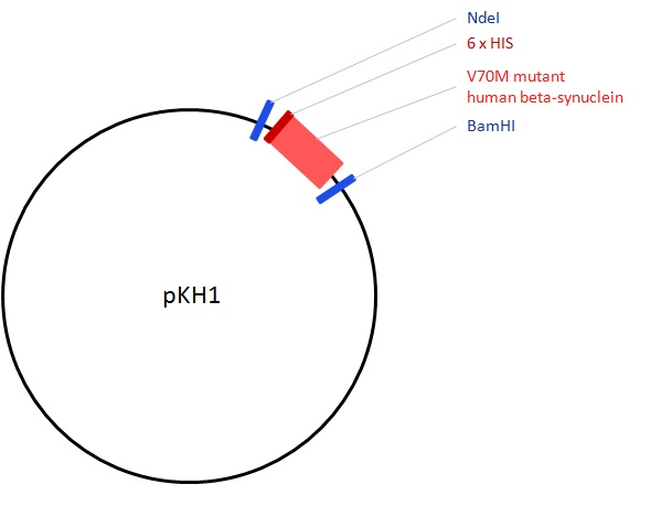 Image for pKH1  Beta-Synuclein V70M Vector