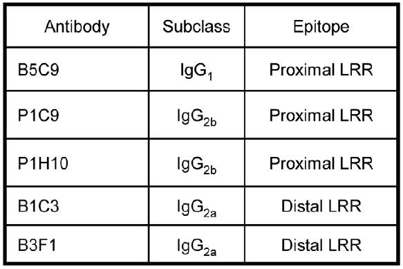 Summary of the IgG subclasses of five m5T4 specific monoclonal antibodies (mAb, made in 5T4KO mice) recognizing distinct epitopes in the proximal and distal 5T4 extracellular LRR containing domains	