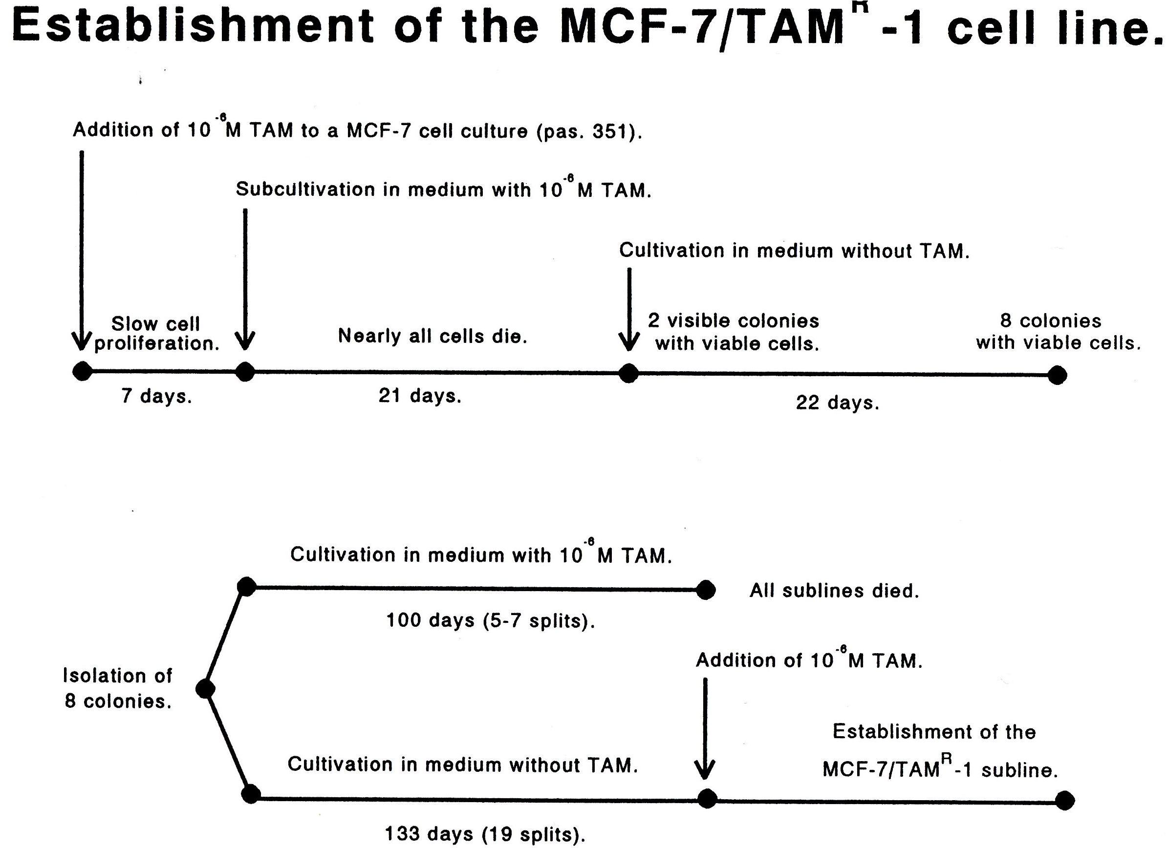 Establishment of MCF-7/TAMR-1 Cell line