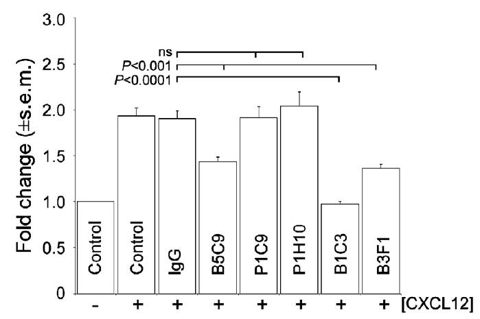 The chemotactic migration exhibited by differentiating WT-ES cells towards CXCL12 was abolished in the presence of the m5T4 specific mAb B1C3 (10 mg) but not in presence of mAb P1C9 or P1H10 (10 mg) or an irrelevant control antibody (10 mg). MAbs B3F1 and B5C9 (10 mg) reduced the chemotactic response. (2 = no CXCL12, + = 10ng CXCL12).  Chemotaxis was assessed using transwell chambers. (Southgate et al. 2010. PLoS One. 5(4):e9982. PMID: 20376365)