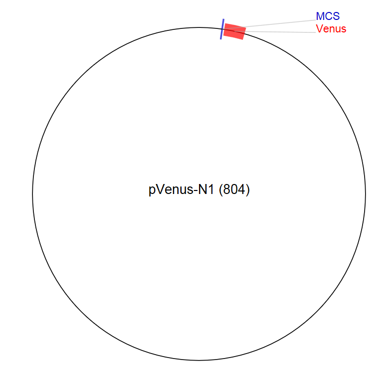 Image for pVenus-N1 (804) Vector