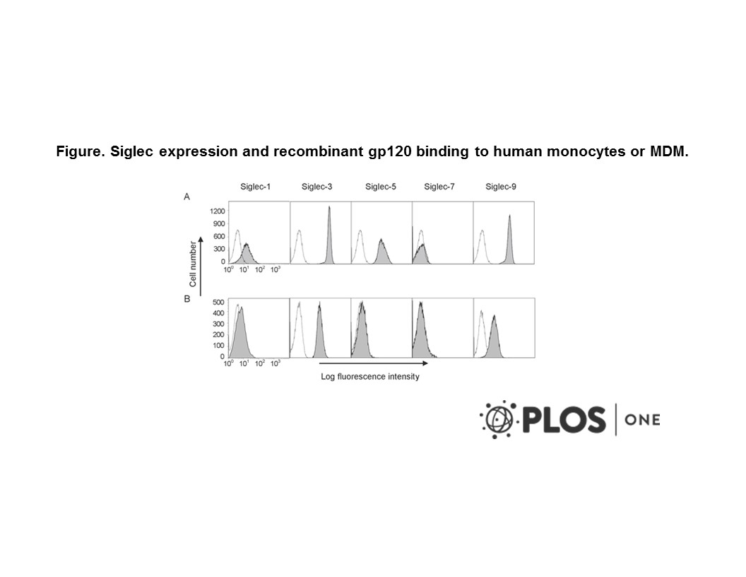 Adapted from Zou et al. 2011. PLoS One. 6(9):e24559. PMID: 21931755  Figure. Siglec expression and recombinant gp120 binding to human monocytes or MDM. (A) The expression of Siglecs (grey) on CD14+ monocytes. (B) The expression of Siglecs (grey) on CD14+ MDM. The controls were stained with PE-conjugated isotype-matched IgGs. All samples were blocked with mouse IgG prior staining.