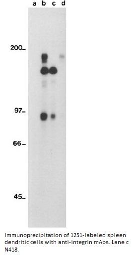 Image for Anti-CD11c [N418]