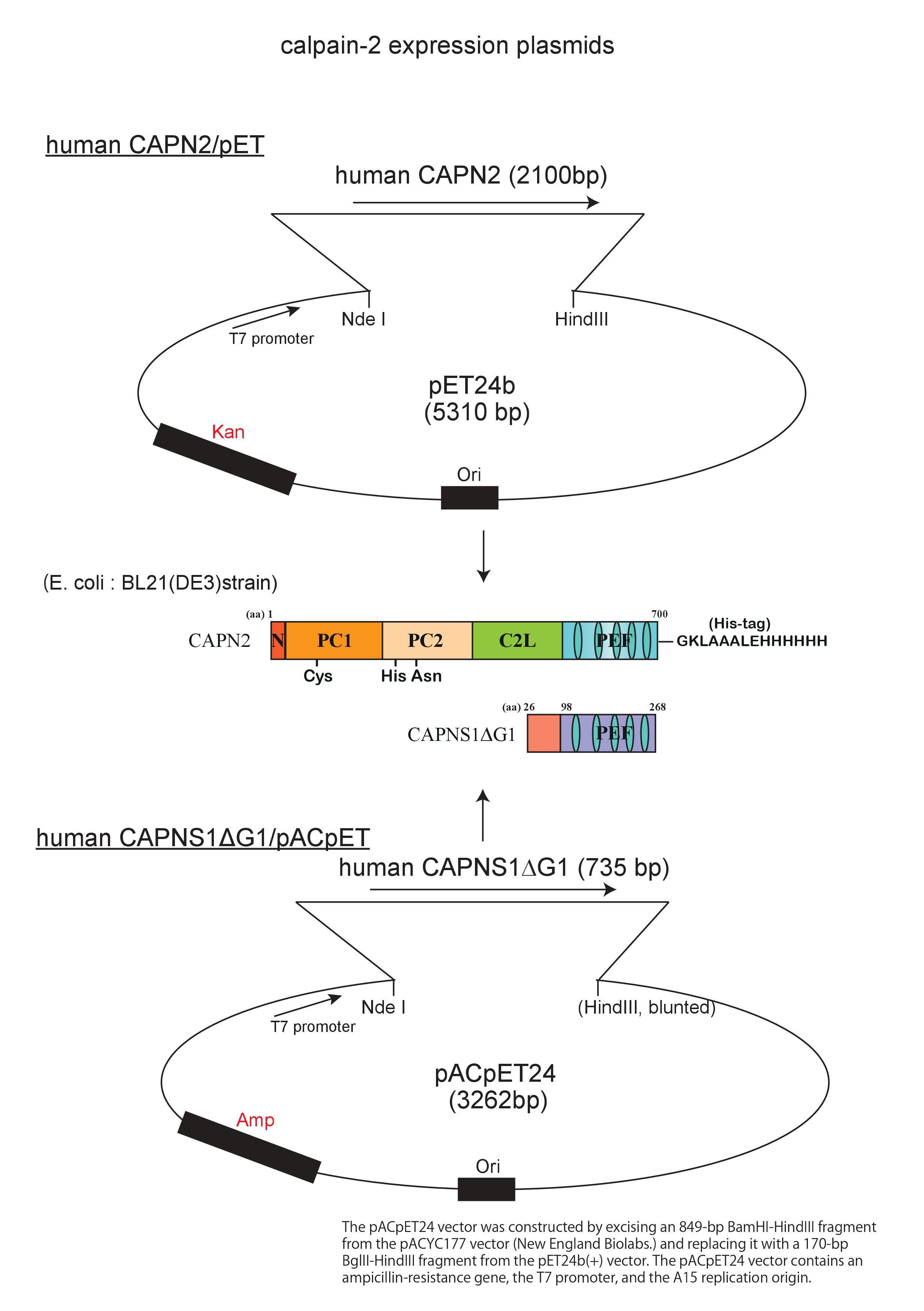 Plasmid maps
