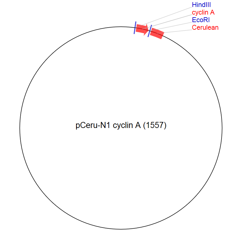 Image for pCeru-N1 cyclin A (1557) Vector