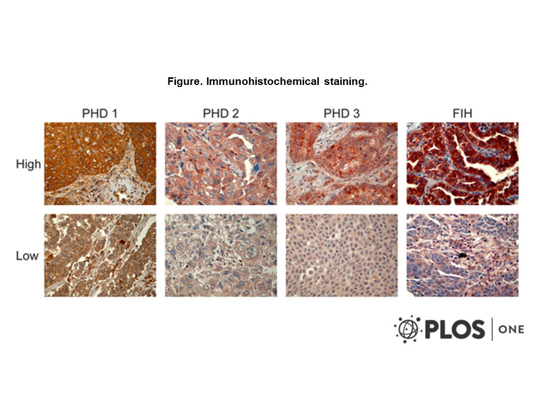 Adapted from Andersen et al. 2011. PLoS One. 6(8):e23847. PMID: 21887331. Figure. Immunohistochemical staining.